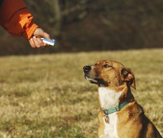 clicker-training-dog2
