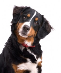 Cute healthy dog looking curiously at the camera