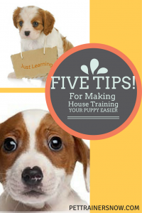 making-house-training-your-puppy-easier