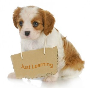 puppy-training-tips-1
