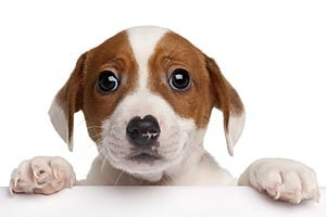 pettrainersnow.com - Five Tips for making house training your puppy easier