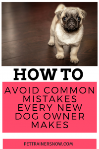 Avoid-common-mistakes-every-new-dog-owner