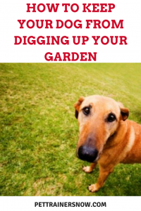 keep your dog from digging