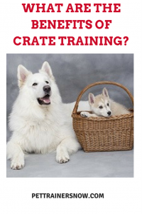 benefits-crate-training
