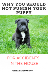 puishing-dog-accidents-in-house