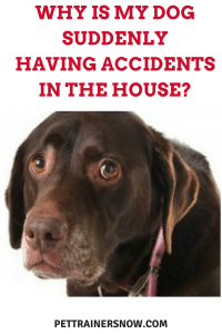 dog having accidents in house