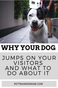 dog jumps on visitors