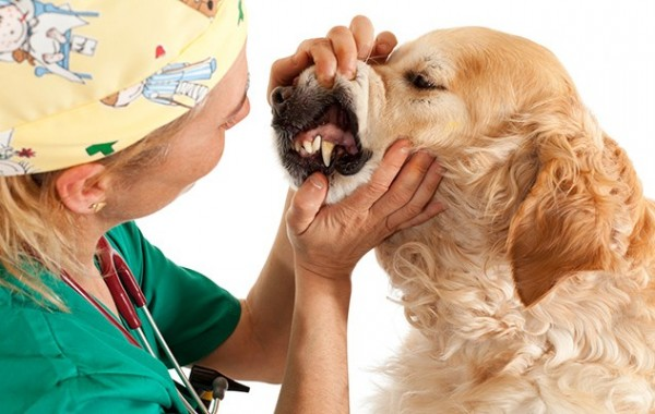 How to Keep Your Dog Calm at the Vet