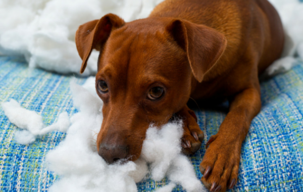 How Do I Keep My Puppy From Chewing Up My House?