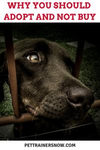 adopt-a-pet-dont-buy-a-pet