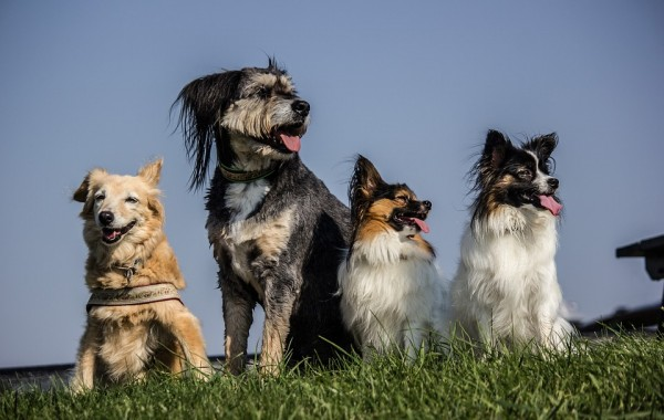 General Health Problems In Dogs