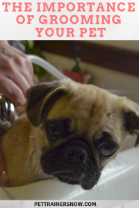 importance-of-grooming-your-dog
