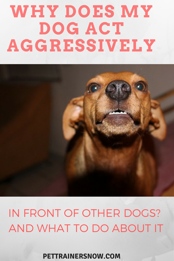 dog-act-aggressively-around-other-dogs