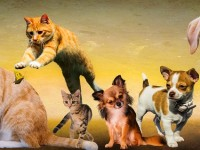 why-do-pets-itch-animals
