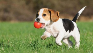 pettrainersnow.com - Why Shouldn't I Punish My Dog for Accidents in the House?