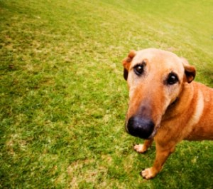 dog-trusts