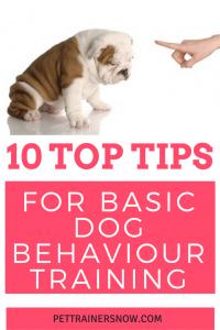 Dog BASIC TRAINING BEHAVIOUR