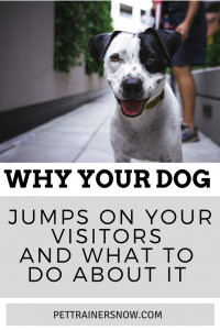 dog jumps on visitors