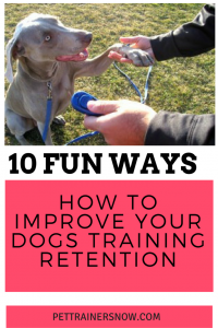 improve-your-dogs-training-retention