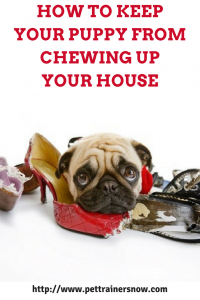 keep-my-puppy-from-chewing-up-my-house