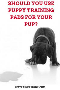 puppy-training-pads