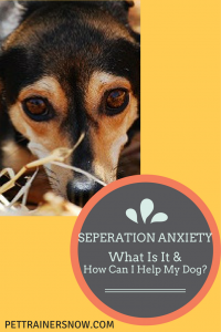 seperation-anxiety