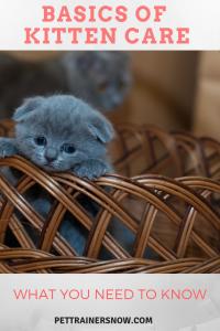 Kitten-care-basics