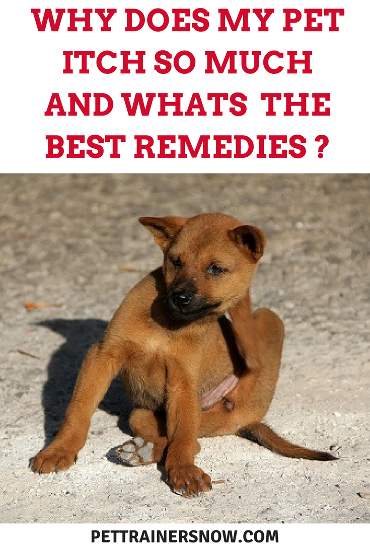 dog-itching-remedies
